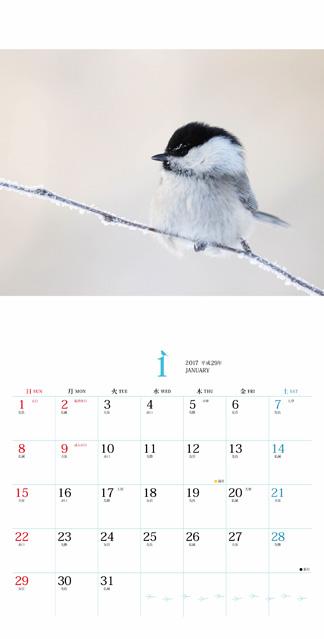 ましかくカレンダー ふわもふことり