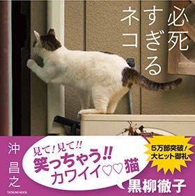 【書籍】必死すぎるネコ